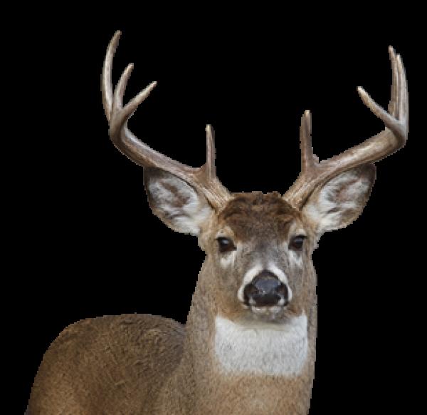 Deer Png Face