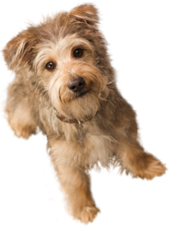 Dog Doll Png