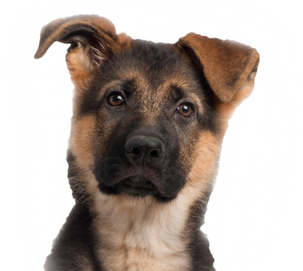 Dog Face for Web Png