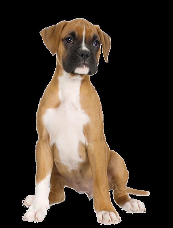 Dog Half Sitting Png