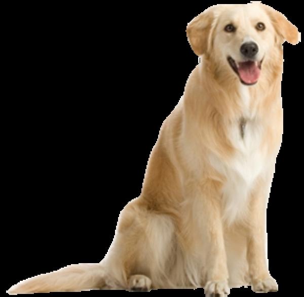 Dog Png for Designing
