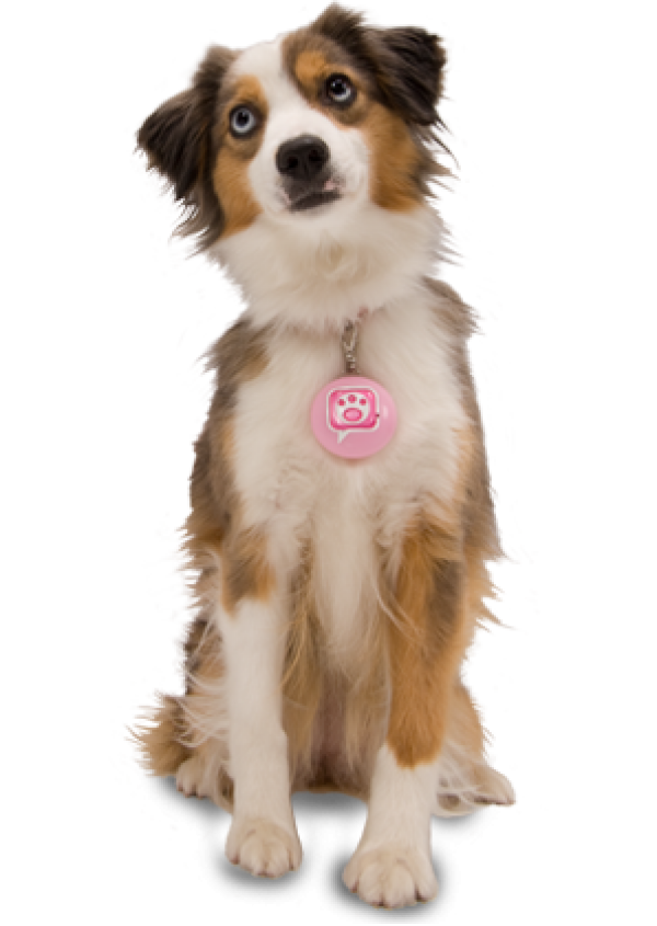 Dog Png For Web With Pink Tag