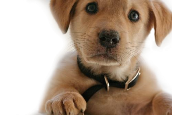 Dog Png Looking at You