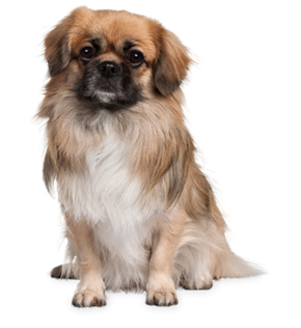 Dog Png with Hair