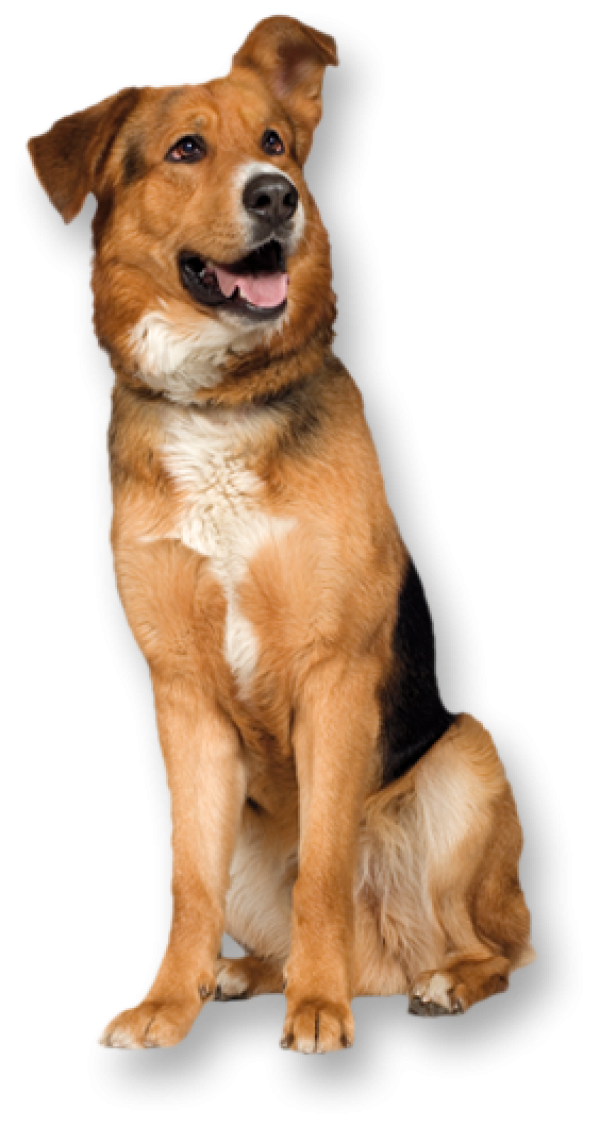 Dog png With Pride