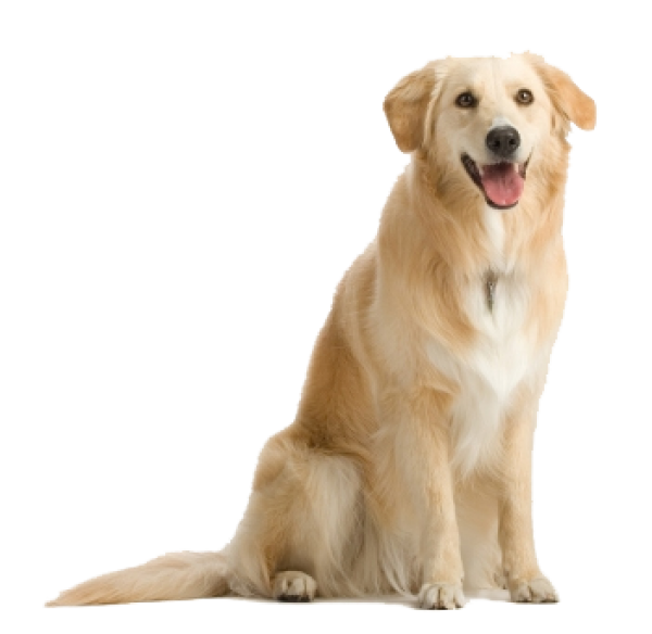 Dog Png With Teeth