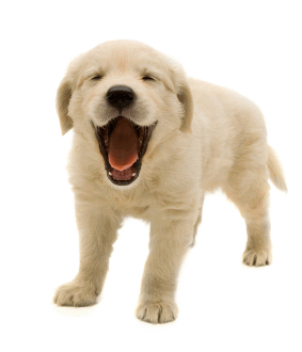Dog Shouting Png For Web