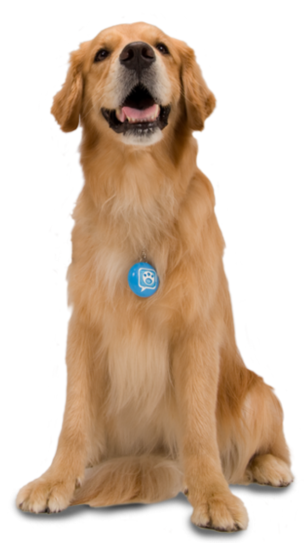 Dog with Blue Tag