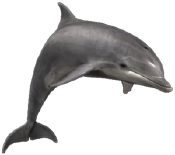 Dolphin Png Icon