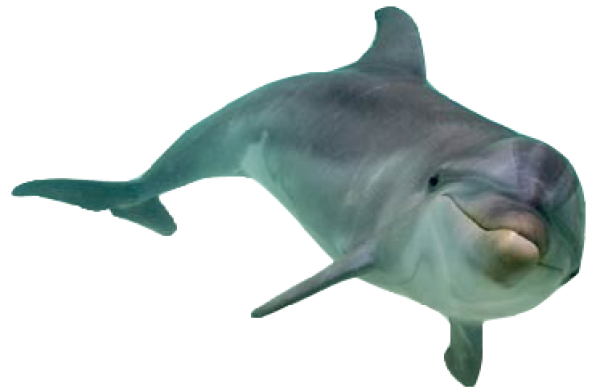 Dolphin Swimming Free Png Image