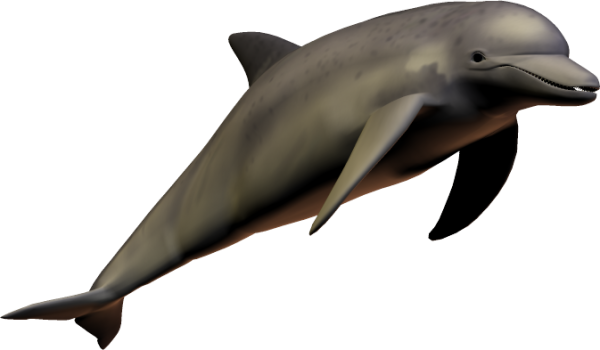 Dolphingpng image download