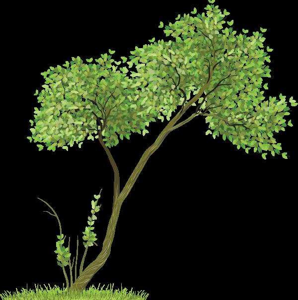 Drawing Tree