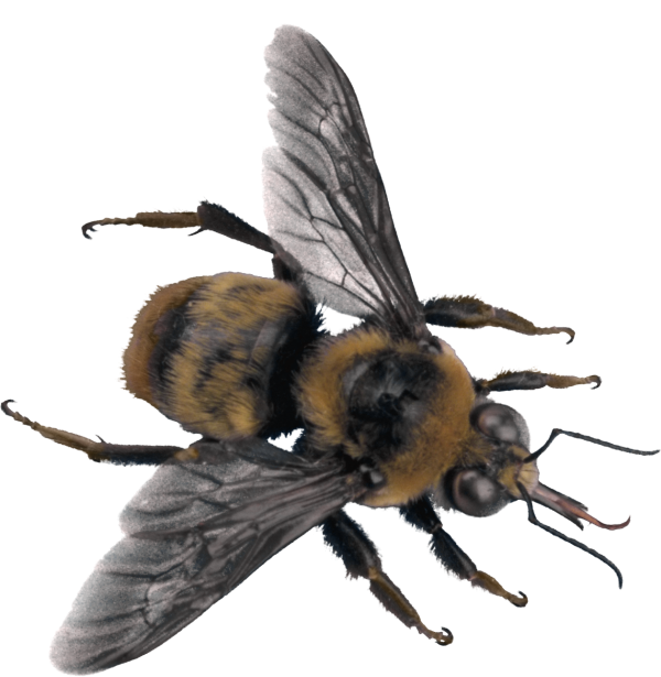free png bee
