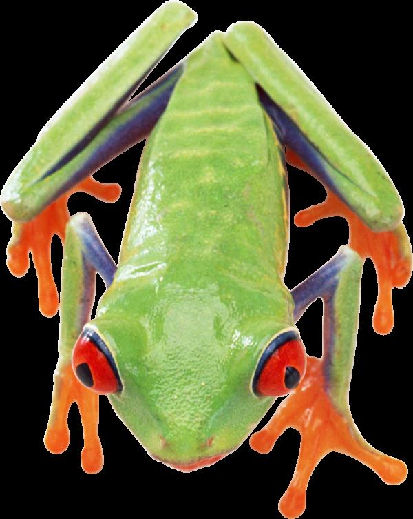 frog free png download