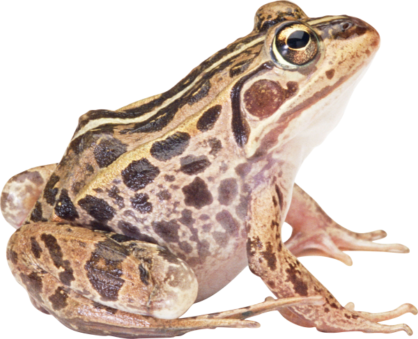 frog hd free png