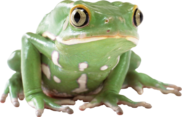 frog hd png free