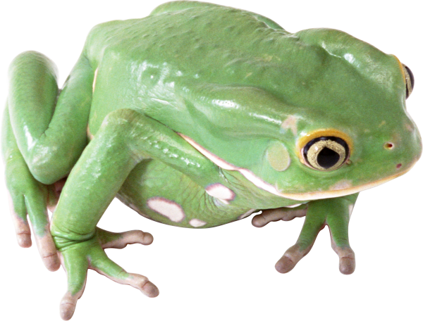 frog hd png