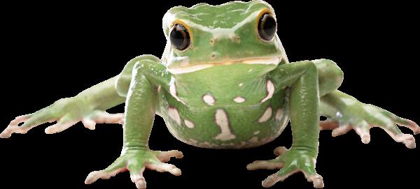 frog png download free