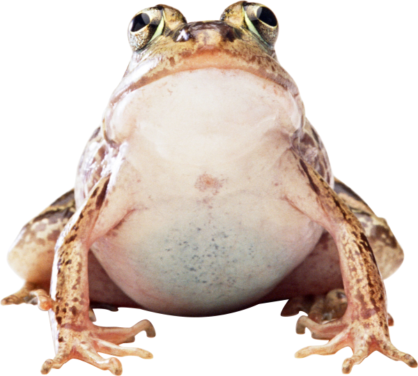 frog png free download
