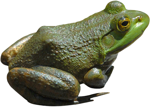 frog png free