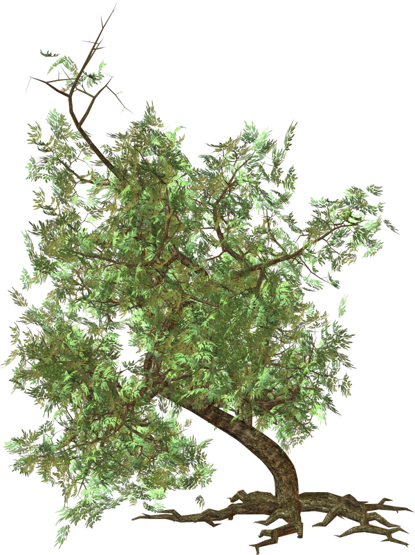 Green Tree Clipart