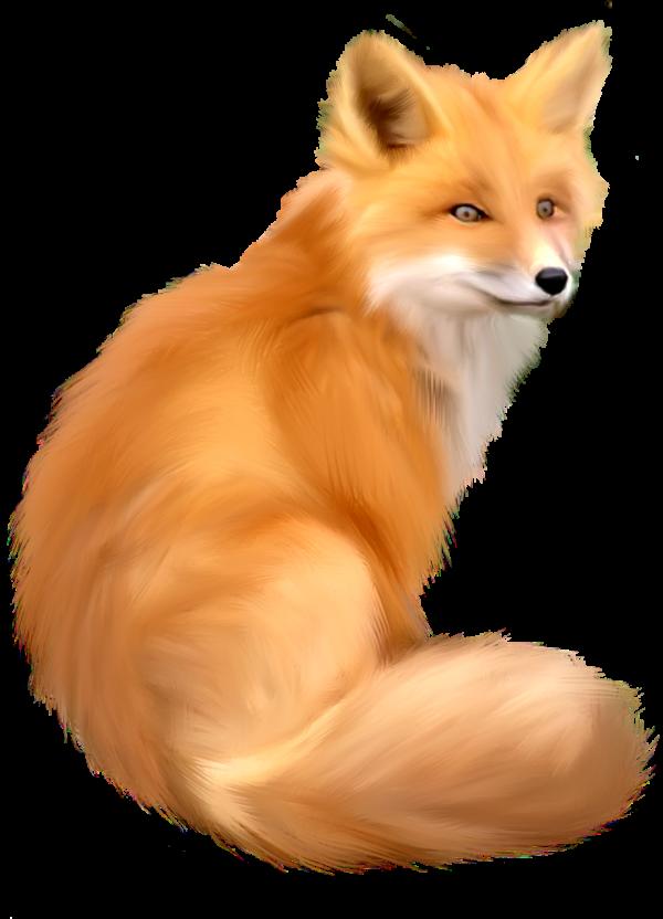 HD fox png
