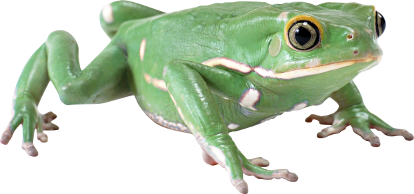 hd frog free png download