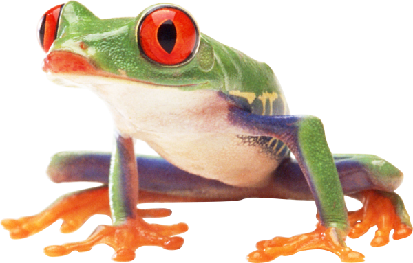 hd frog png free download