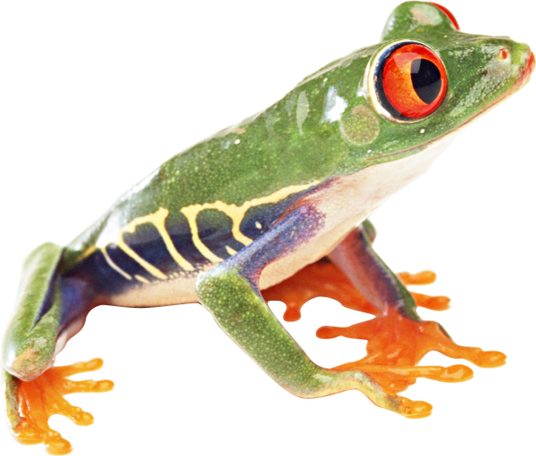 hd frog png free