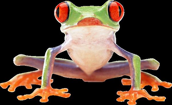 hd frog png