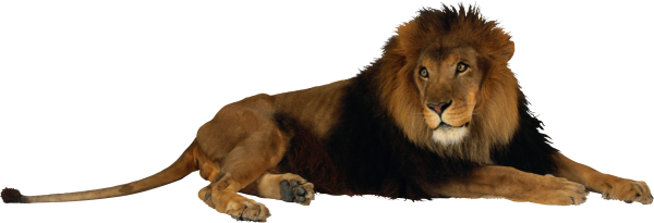 Image Of A Roaring Lion Dowload: Lion PNG Free Download 1
