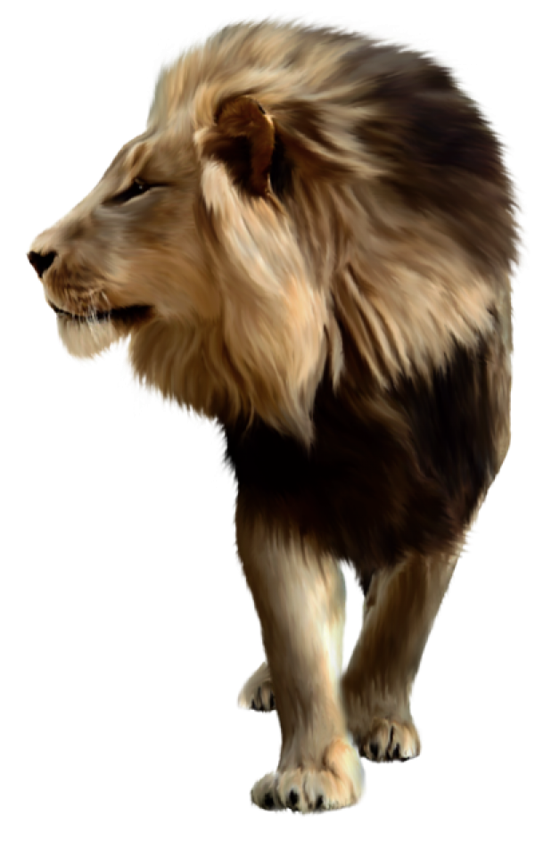 Lion PNG Free Download 11