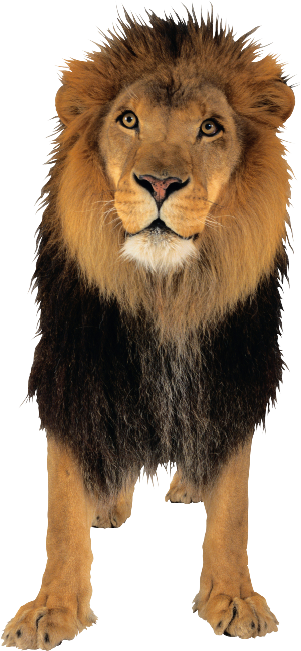 Lion Png Free Download 3