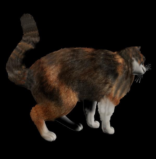 Long Tail Cat