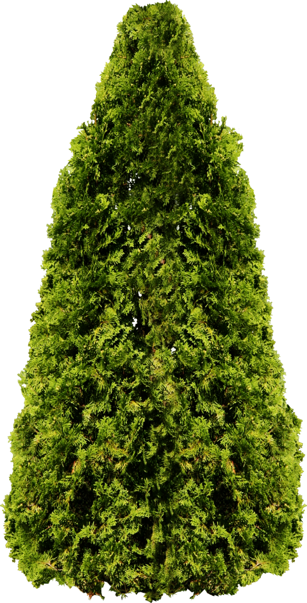 Narrow Tree Png