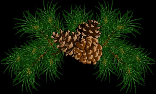 Pine Cone Illustrator Png