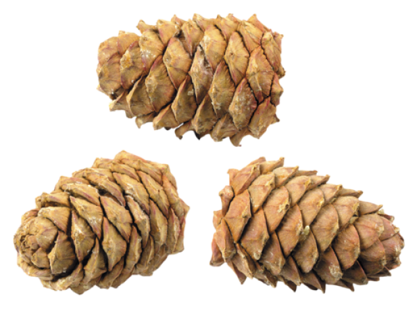 Png Cone Png Image
