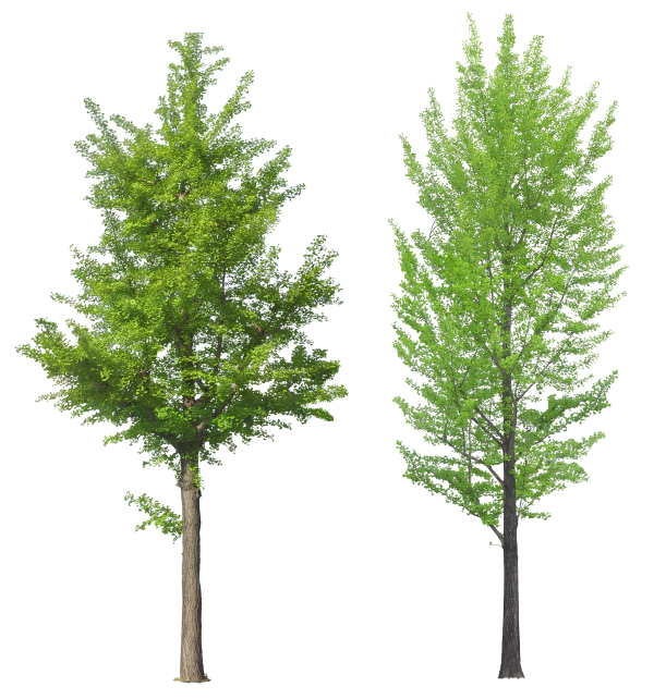Png Tree Free