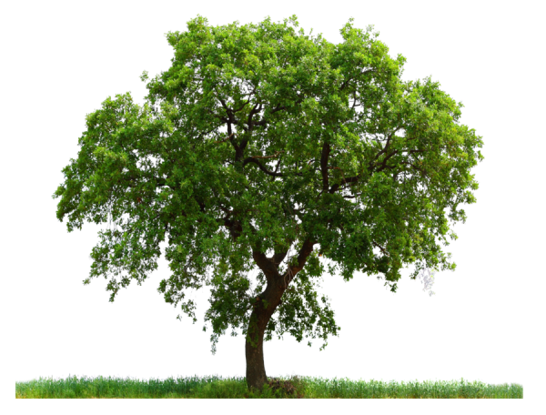 PNG Tree In Grass