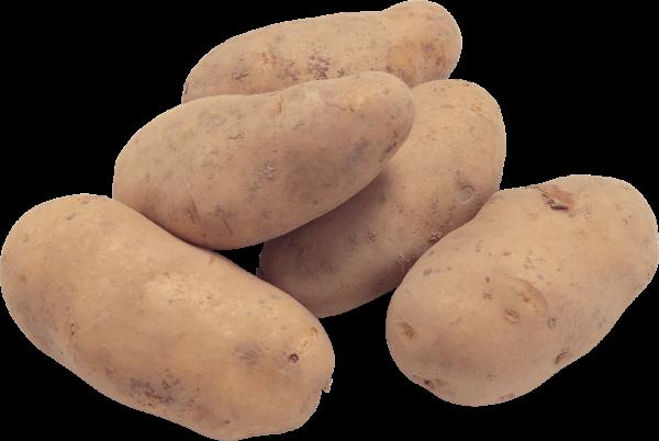 Potato PNG Free Download 13