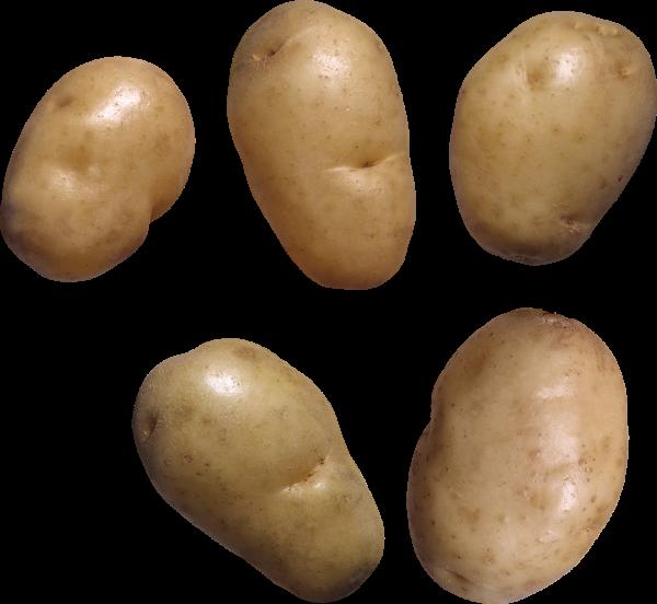 Potato PNG Free Download 14