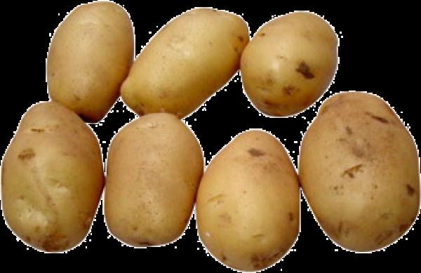 Potato PNG Free Download 9