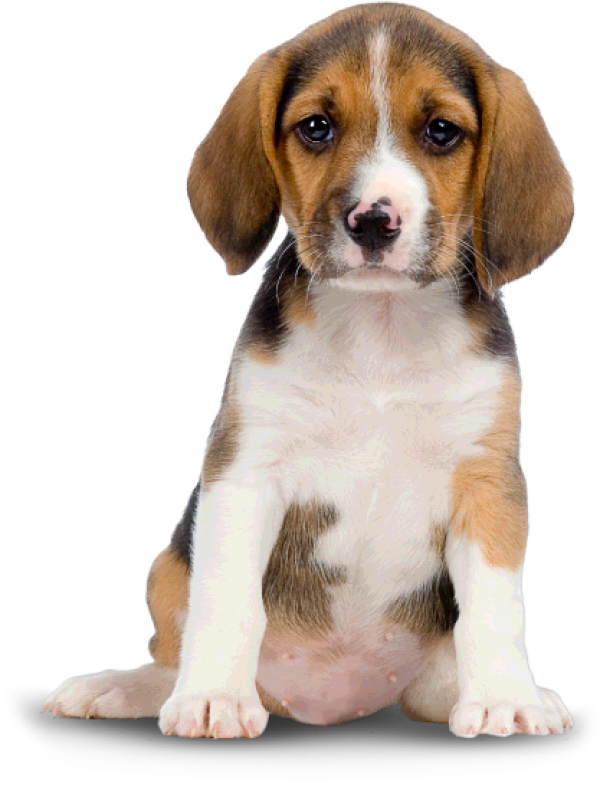 Puppy Dog Png For Web