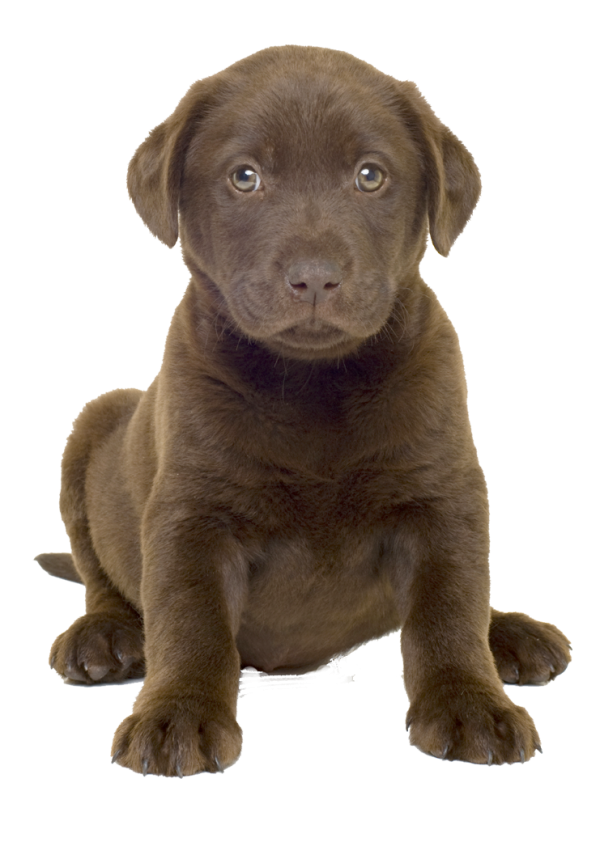 Puppy Dog Png Image