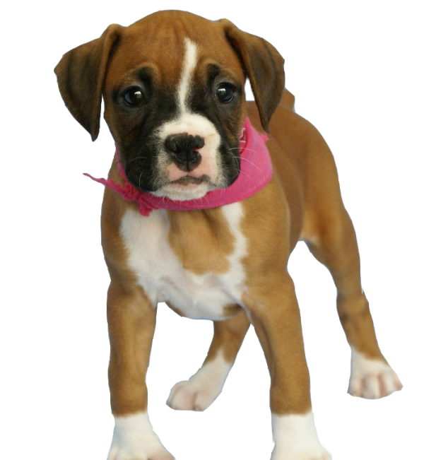 Puppy Dog With Pink Ribbon Png