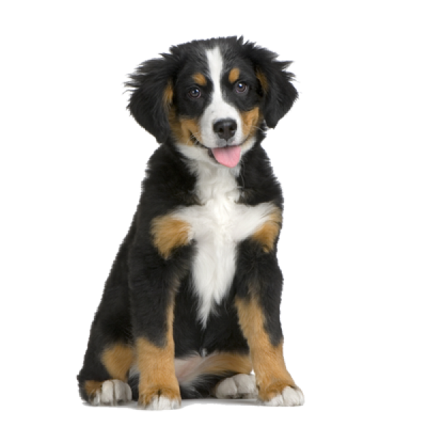 Puppy Png for Web