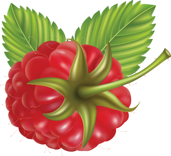 Raspberry PNG Free Download 10