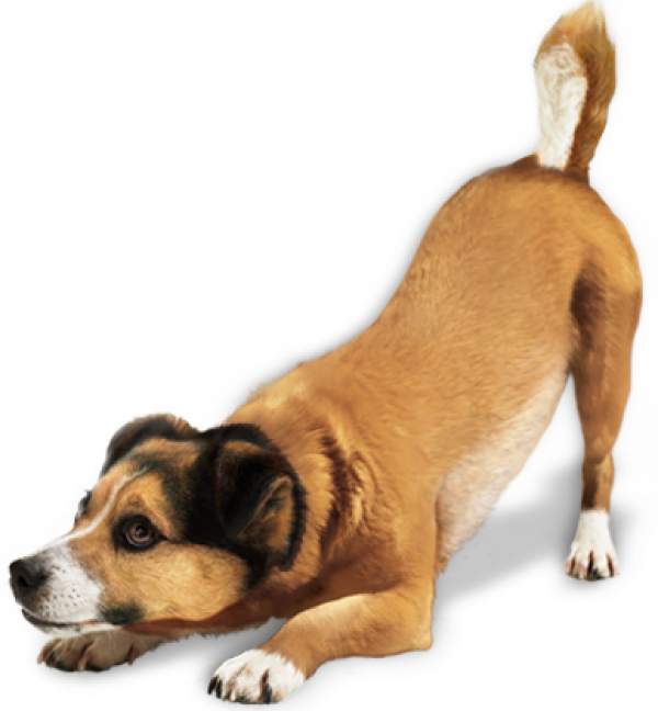 Ready for Jump Dog Png