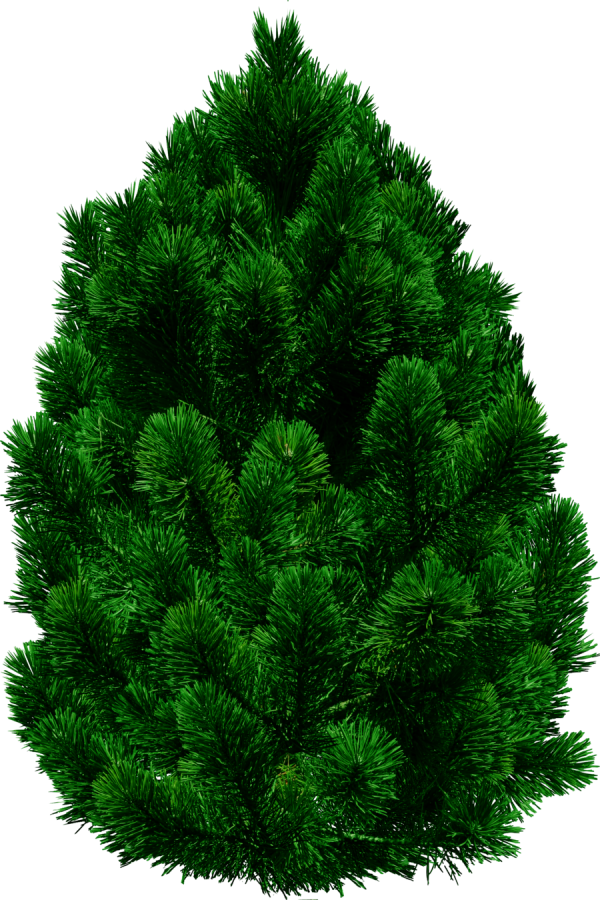 Real Christmas Tree Png