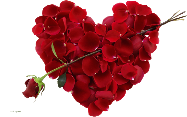 Rose png with heart